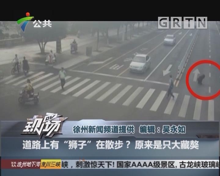 """道路上有""""狮子""""在散步? 原来是只大藏獒"""