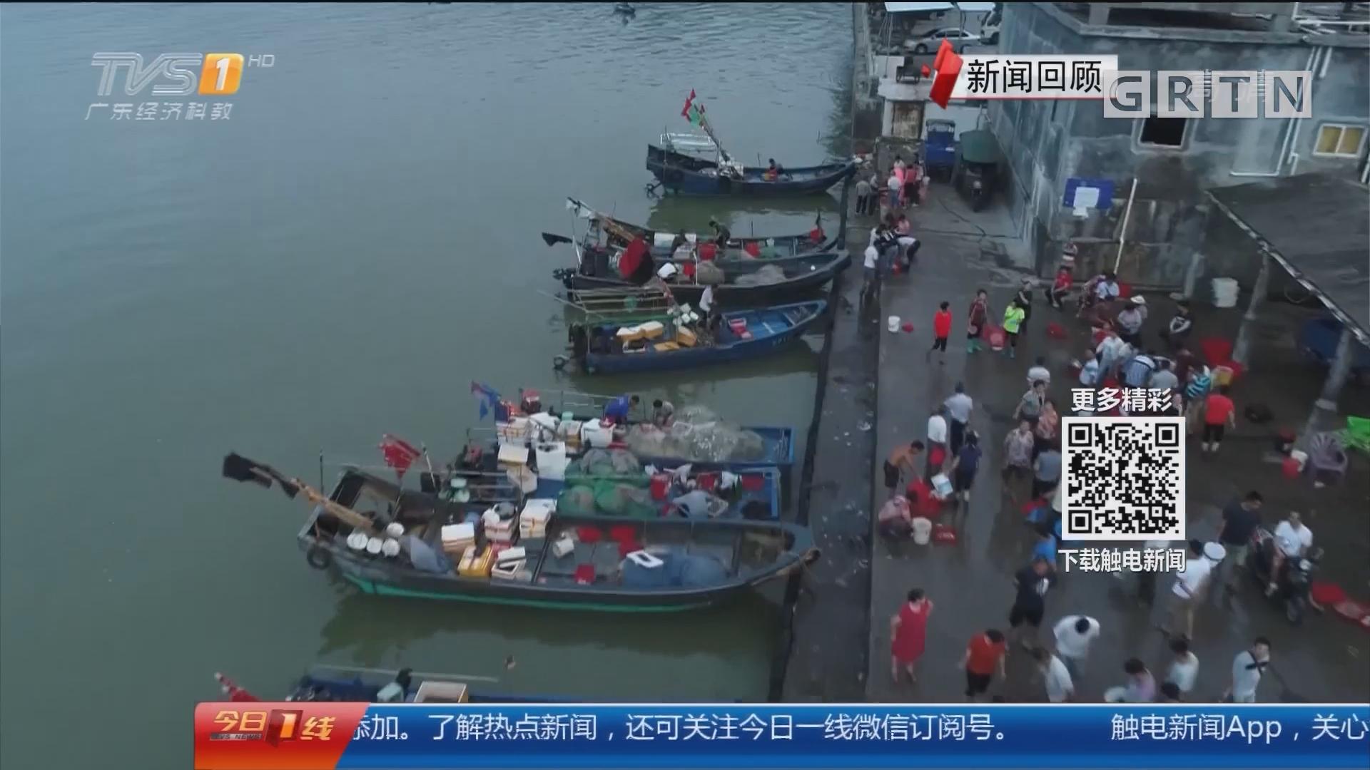 """一线调查:休渔期的""""渔获""""追踪 休渔期码头仍有交易 渔获哪来的?"""