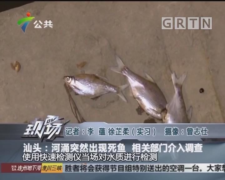 汕头:河涌突然出现死鱼 相关部门介入调查