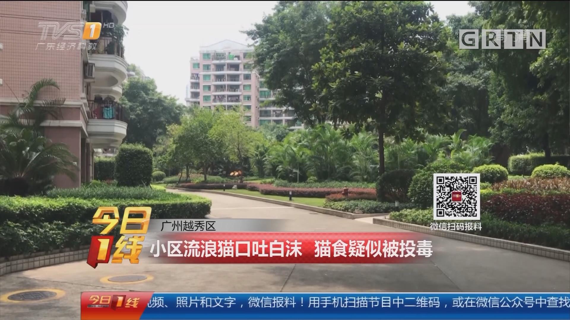 广州越秀区:小区流浪猫口吐白沫 猫食疑似被投毒