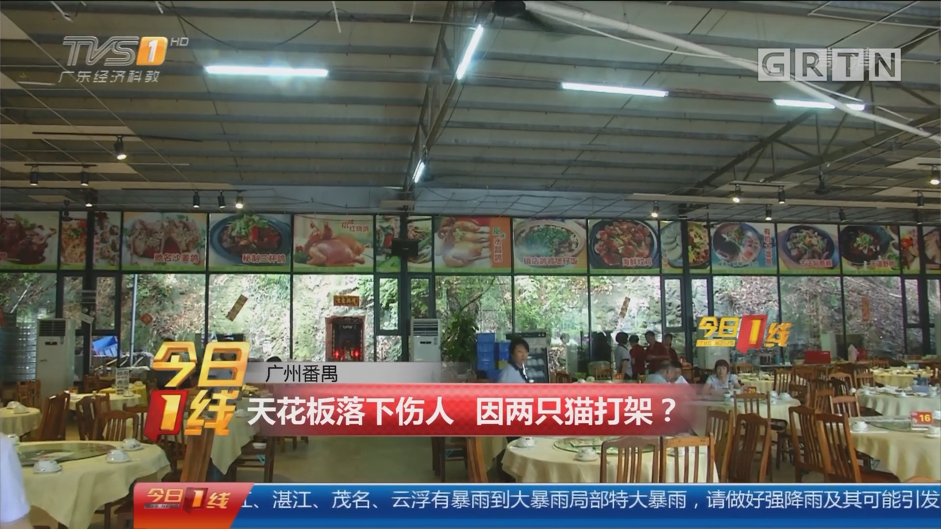 广州番禺:天花板落下伤人 因两只猫打架?