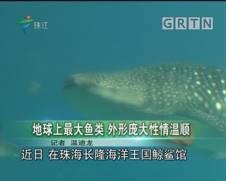 地球上最大鱼类 外形庞大性情温顺