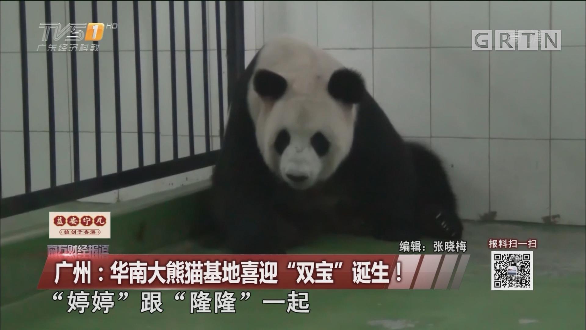"""广州:华南大熊猫基地喜迎""""双宝""""诞生!"""