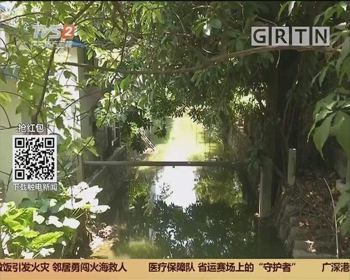 """广州荔湾:男子""""贪玩""""爬树过河 失足摔下命悬一线"""