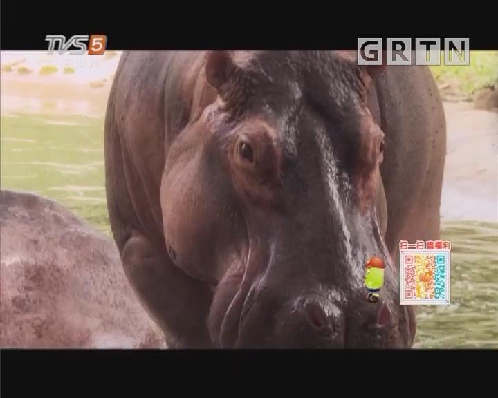 [2018-08-11]动物笑当家