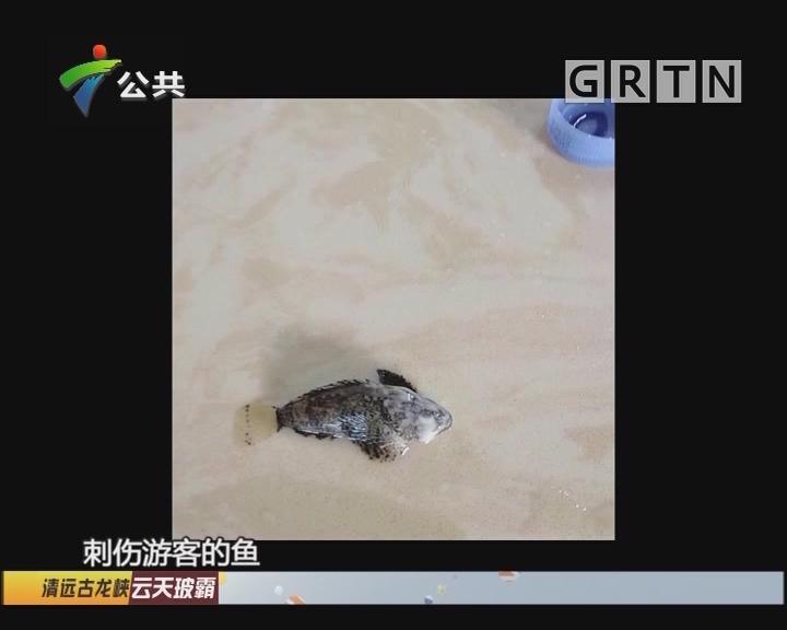 惠州:游客海边游玩时被刺伤 市民下海需谨慎
