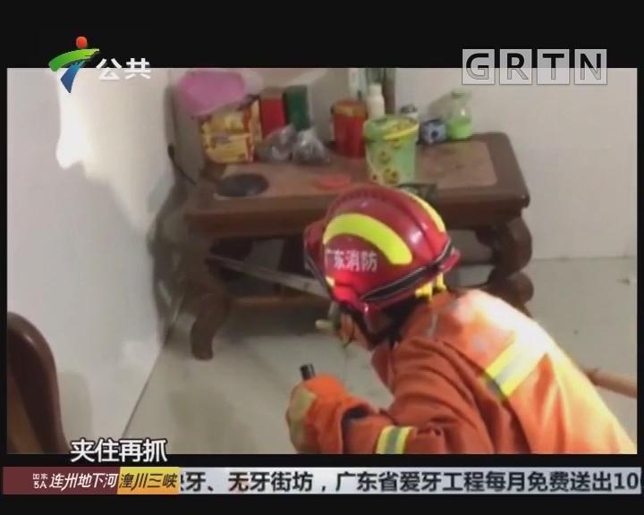 中山:屋内发现毒蛇 消防员及时处置