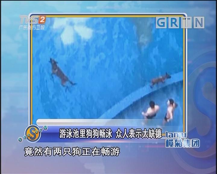 游泳池里狗狗畅泳 众人表示太缺德