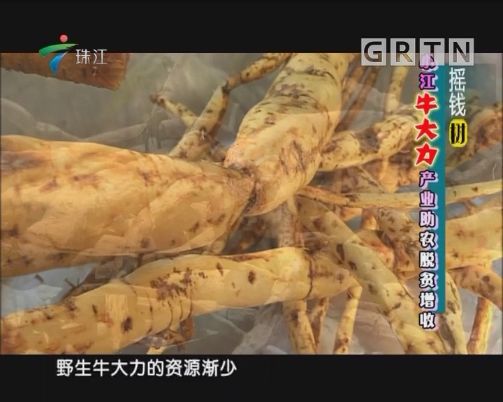 [2018-08-13]摇钱树:小江牛大力产业助农脱贫增收