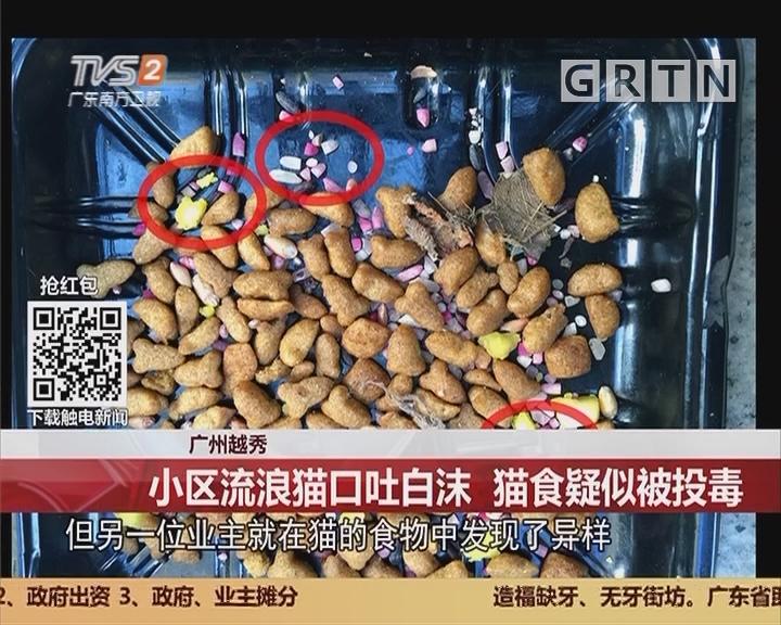 广州越秀:小区流浪猫口吐白沫 猫食疑似被投毒
