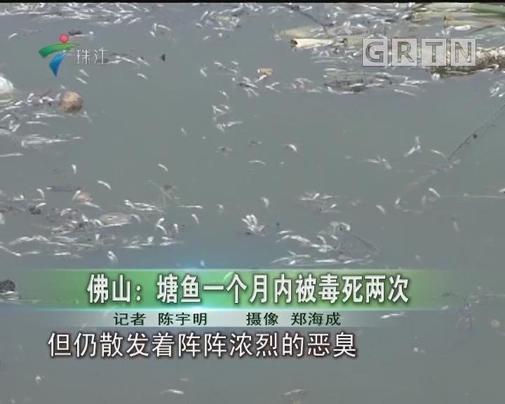 佛山:塘鱼一个月内被毒死两次