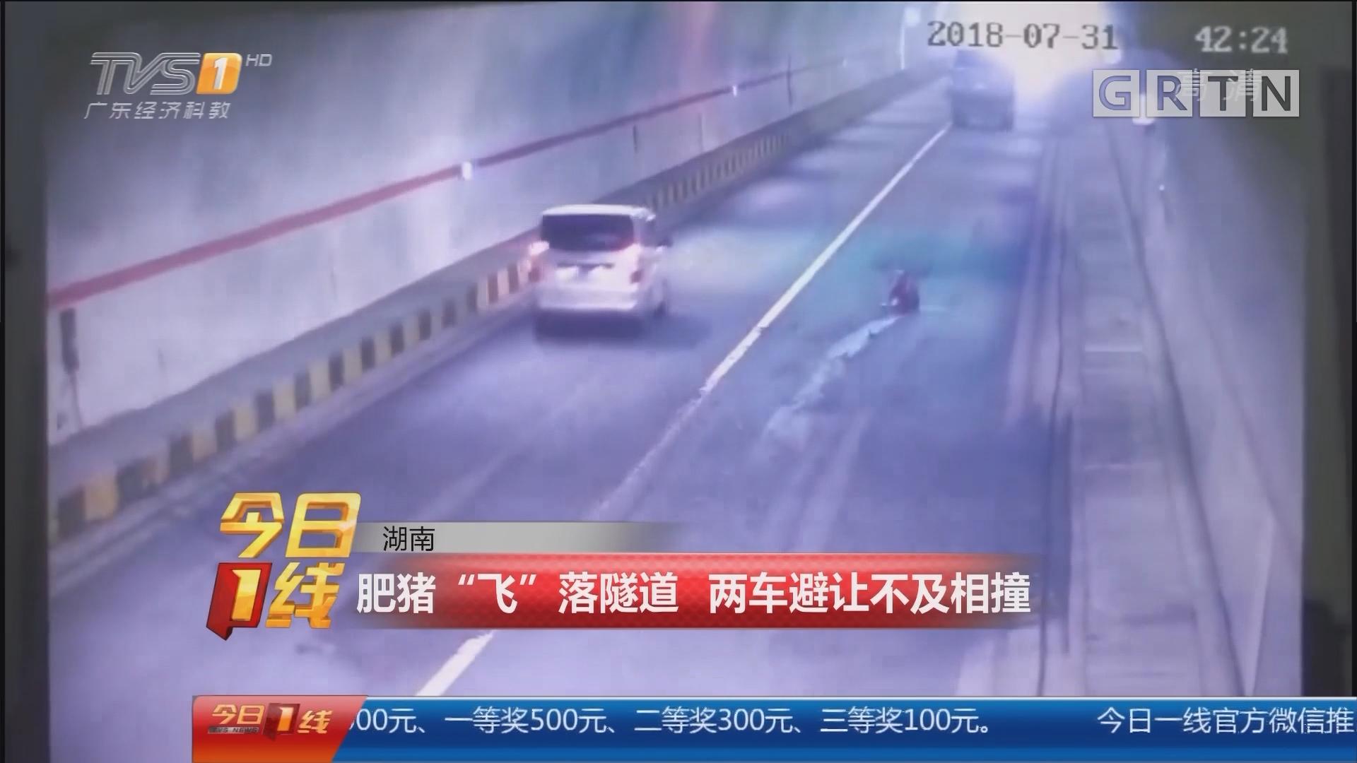 """湖南:肥猪""""飞""""落隧道 两车避让不及相撞"""