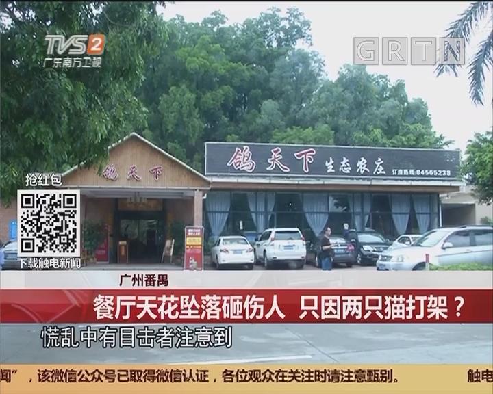 广州番禺:餐厅天花坠落砸伤人 只因两只猫打架?