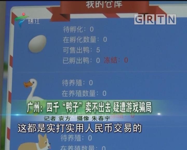 """广州:四千""""鸭子""""卖不出去 疑遭游戏骗局"""