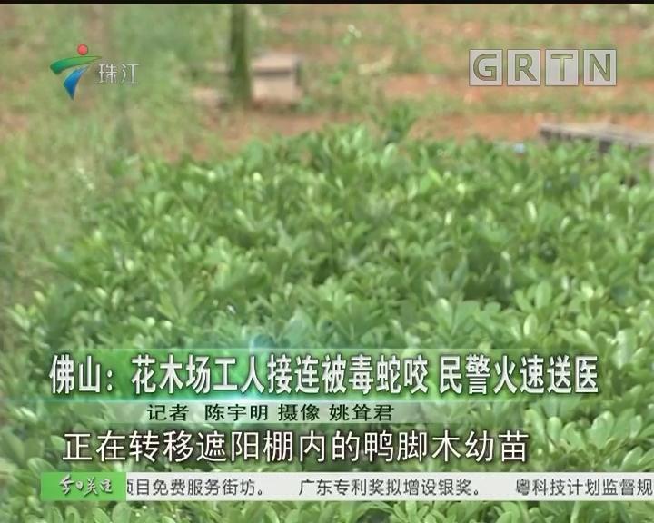 佛山:花木场工人接连被毒蛇咬 民警火速送医