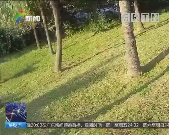 东莞:藏獒逃出狗笼 连续袭击4人