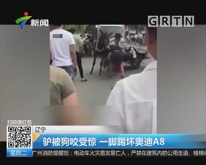 辽宁:驴被狗咬受惊 一脚踢坏奥迪A8