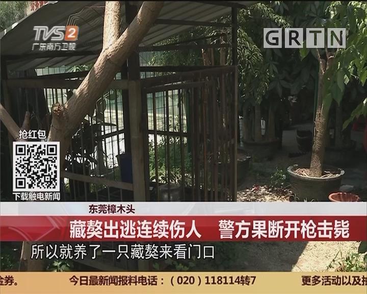 东莞樟木头:藏獒出逃连续伤人 警方果断开枪击毙