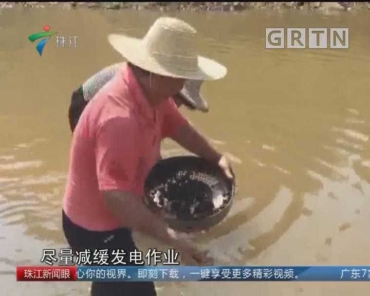 """河源:""""网红河""""每天过百人捞河蚬"""