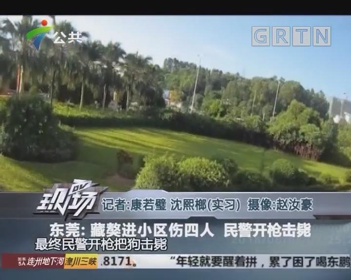 东莞:藏獒进小区伤四人 民警开枪击毙