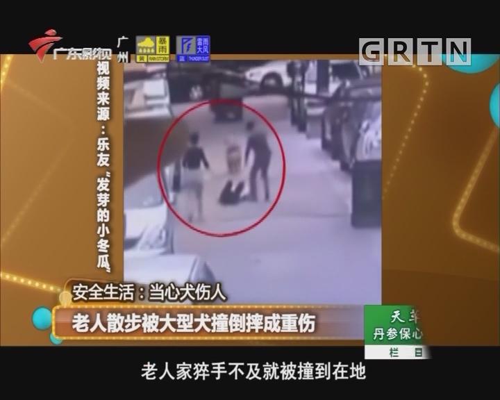 老人散步被大型犬撞倒摔成重伤
