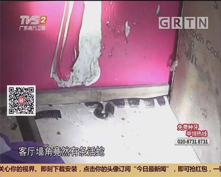 中山坦洲:剧毒银环蛇 凌晨进民宅