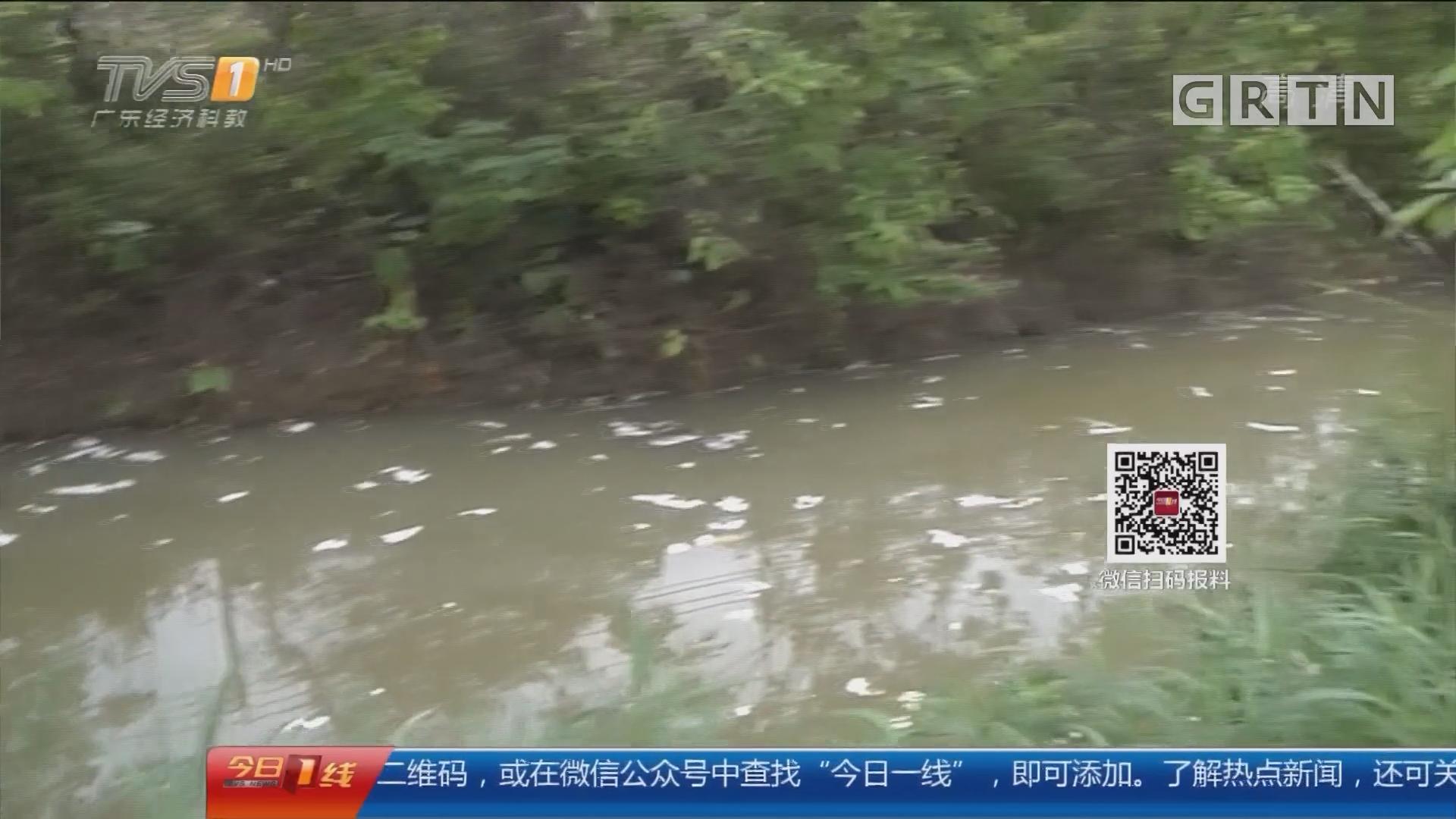 佛山南海:东主涌遭白色泡沫覆盖 环保局介入调查