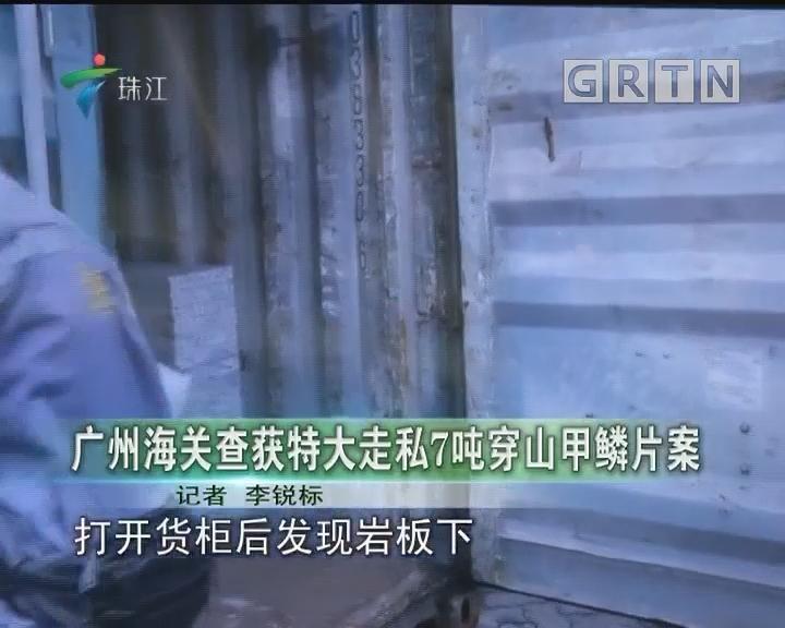 广州海关查获特大走私7吨穿山甲鳞片案