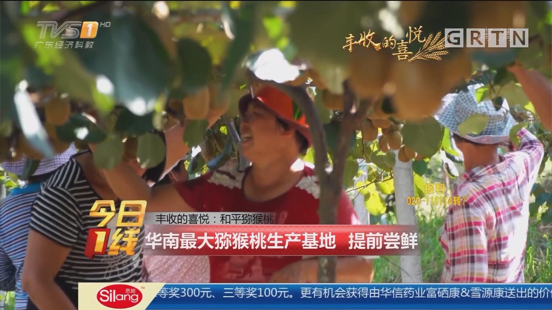 丰收的喜悦:和平猕猴桃 华南最大猕猴桃生产基地 提前尝鲜