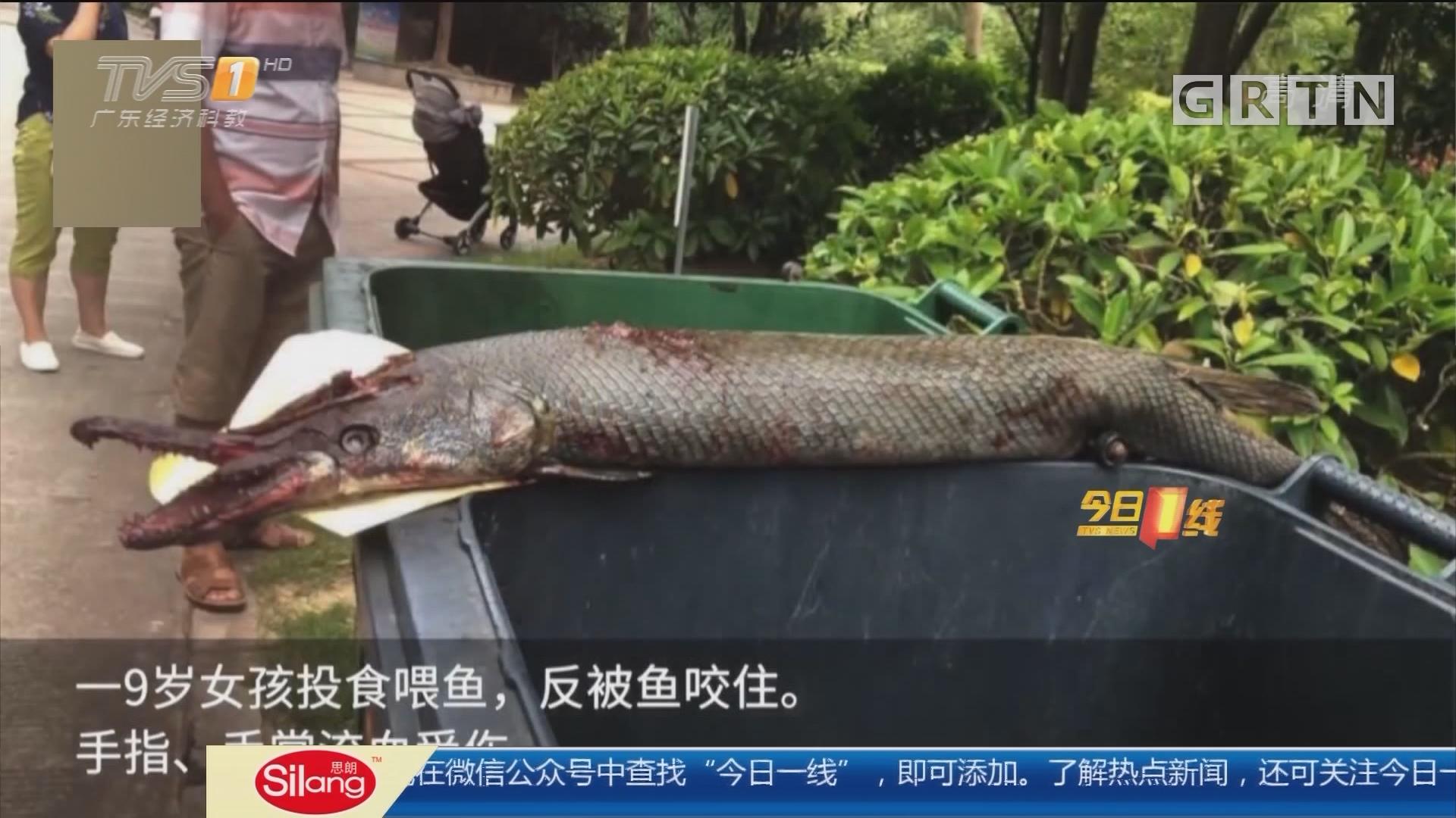 """广西南宁:9岁女孩景观池投食 被""""怪鱼""""咬伤"""