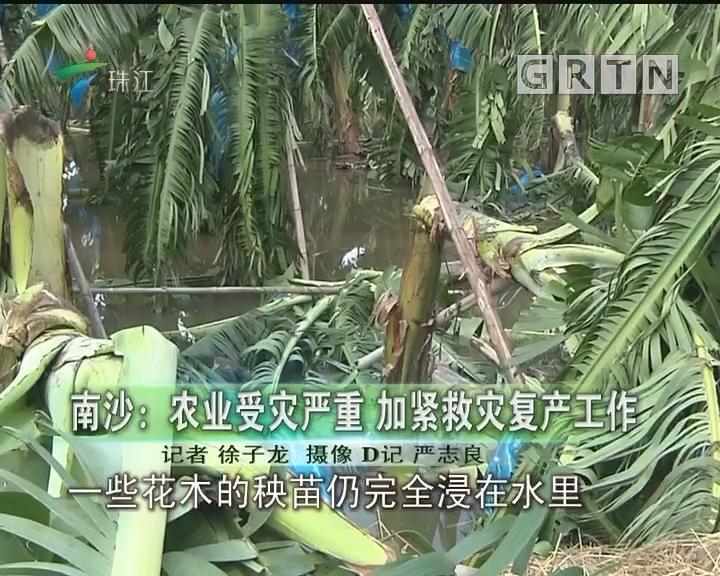 南沙:农业受灾严重 加紧救灾复产工作