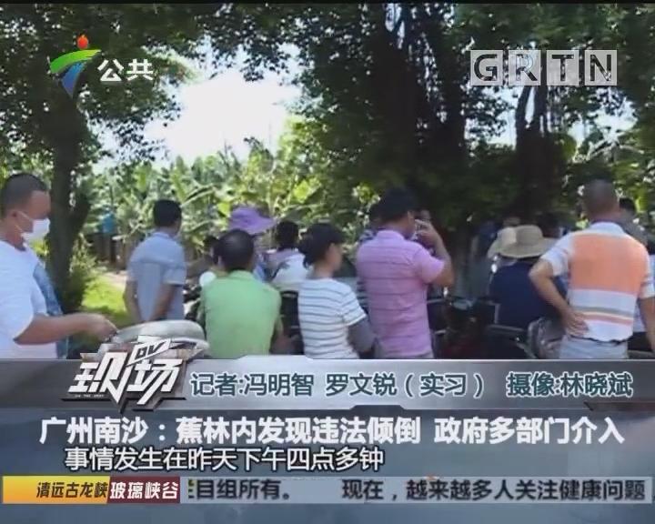 广州南沙:蕉林内发现违法倾倒 政府多部门介入