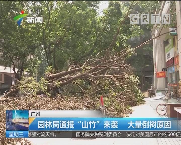"""广州:园林局通报""""山竹""""来袭 大量倒树原因"""