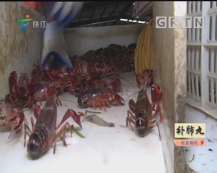 [2018-09-17]摇钱树:小龙虾 大文章