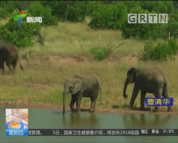 博茨瓦纳:惊现近90头大象尸体 象牙被盗