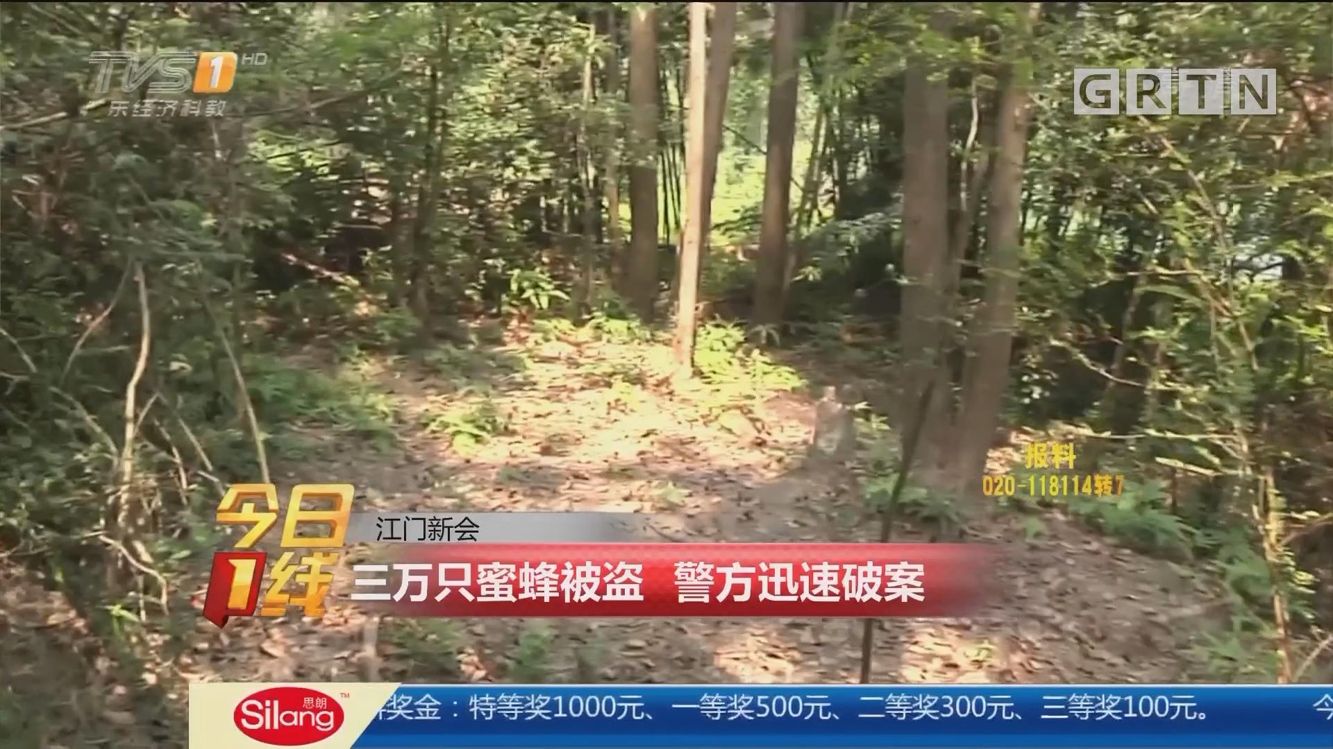 江门新会:三万只蜜蜂被盗 警方迅速破案