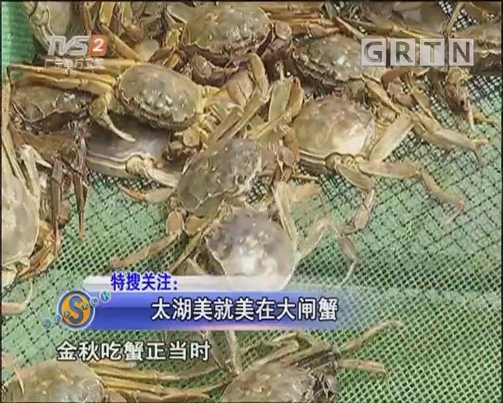 太湖美就美在大闸蟹