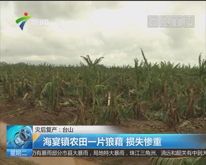 灾后复产:台山 海宴镇农田一片狼藉 损失惨重