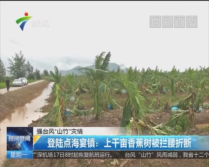 """强台风""""山竹""""灾情 登陆点海宴镇:上千亩香蕉树被拦腰折断"""