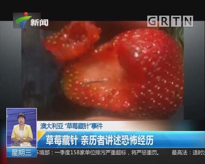 """澳大利亚""""草莓藏针""""事件:草莓藏针 亲历者讲述恐怖经历"""