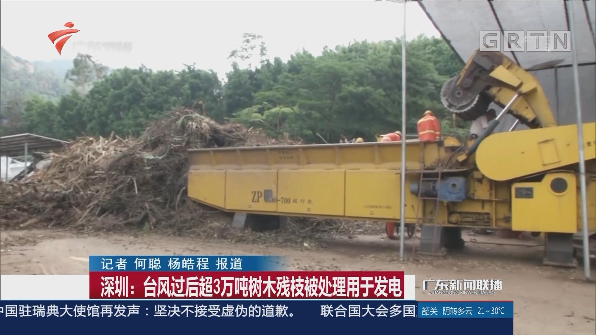 深圳:台风过后超3万吨树木残枝被处理用于发电
