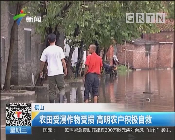佛山:农田受浸作物受损 高明农户积极自救