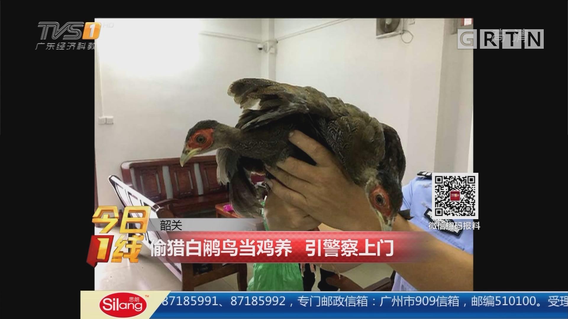 韶关:偷猎白鹇鸟当鸡养 引警察上门