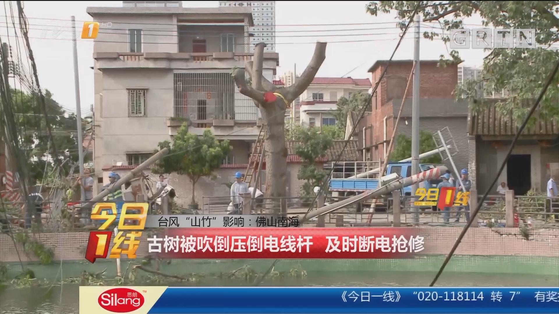 """台风""""山竹""""影响:佛山南海 古树被吹倒压倒电线杆 及时断电抢修"""