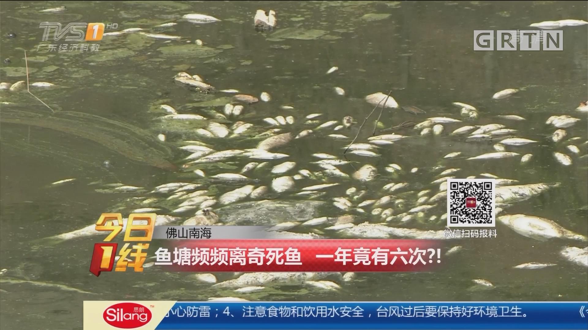 佛山南海:鱼塘频频离奇死鱼 一年竟有六次?!