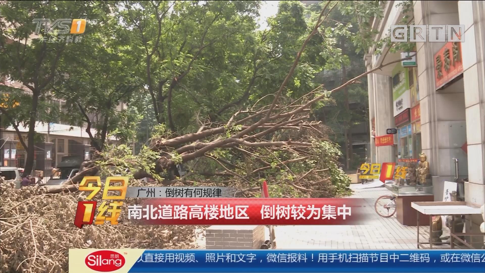 广州:倒树有何规律 南北道路高楼地区 倒树较为集中