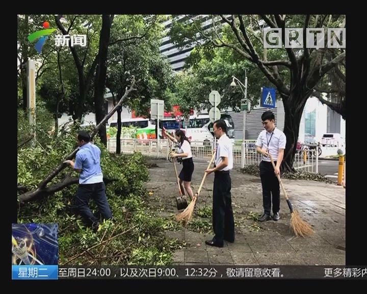 深圳:市民自发走上街头清理树木