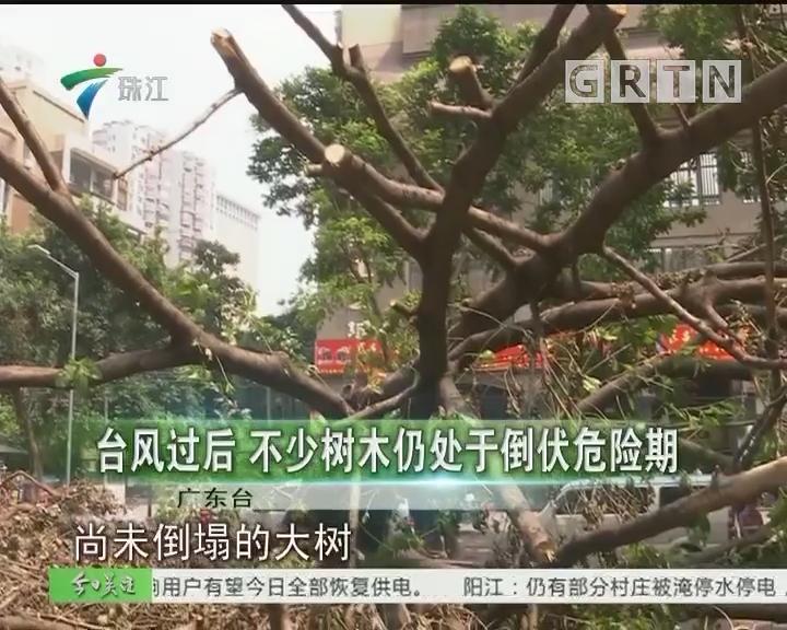 台风过后 不少树木仍处于倒伏危险期