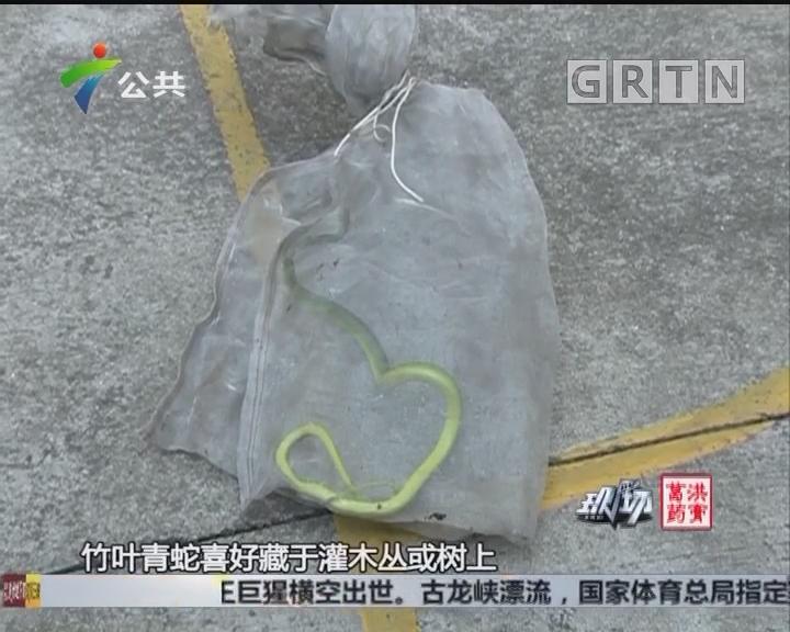 """东莞:竹叶青搭顺风车 被巡警消防""""接""""下车"""