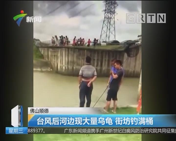 佛山顺德:台风后河边现大量乌龟 街坊钓满桶